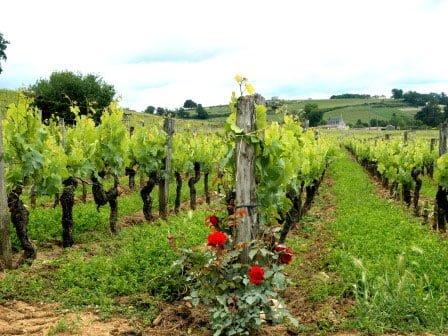 winetour-bwinetour
